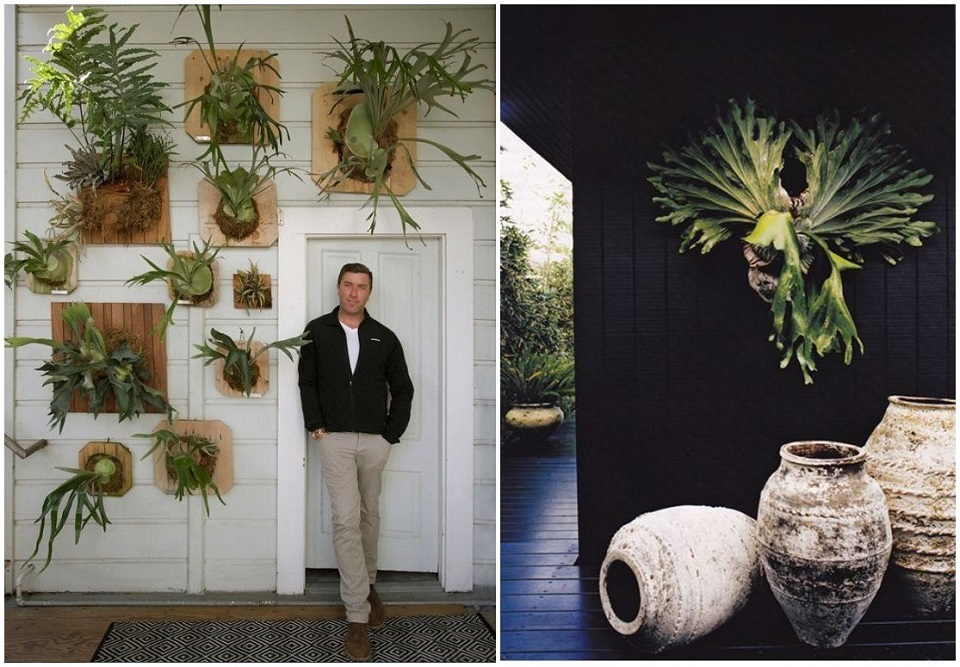 Wall Plant Antlers-horz