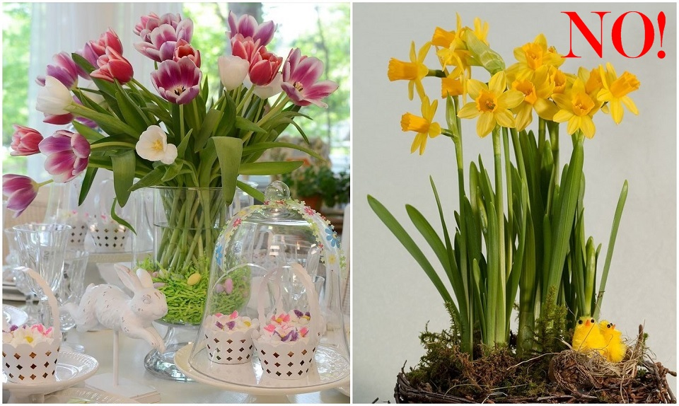 Easter Tulips-horz