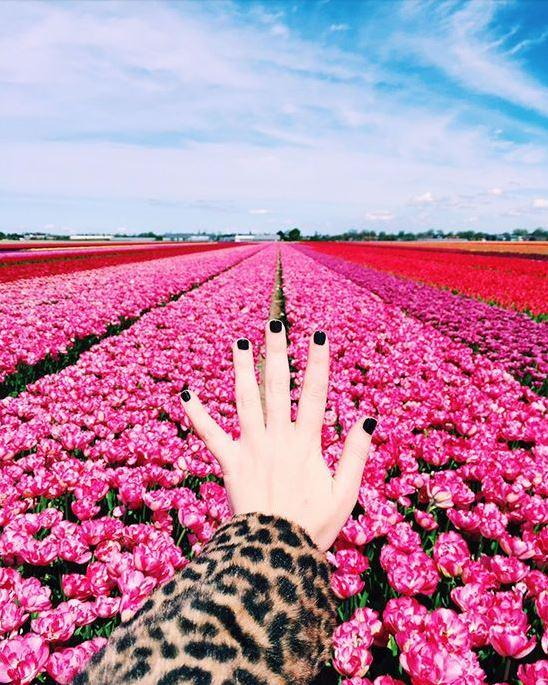 9_Design Love Fest_Flower Fields