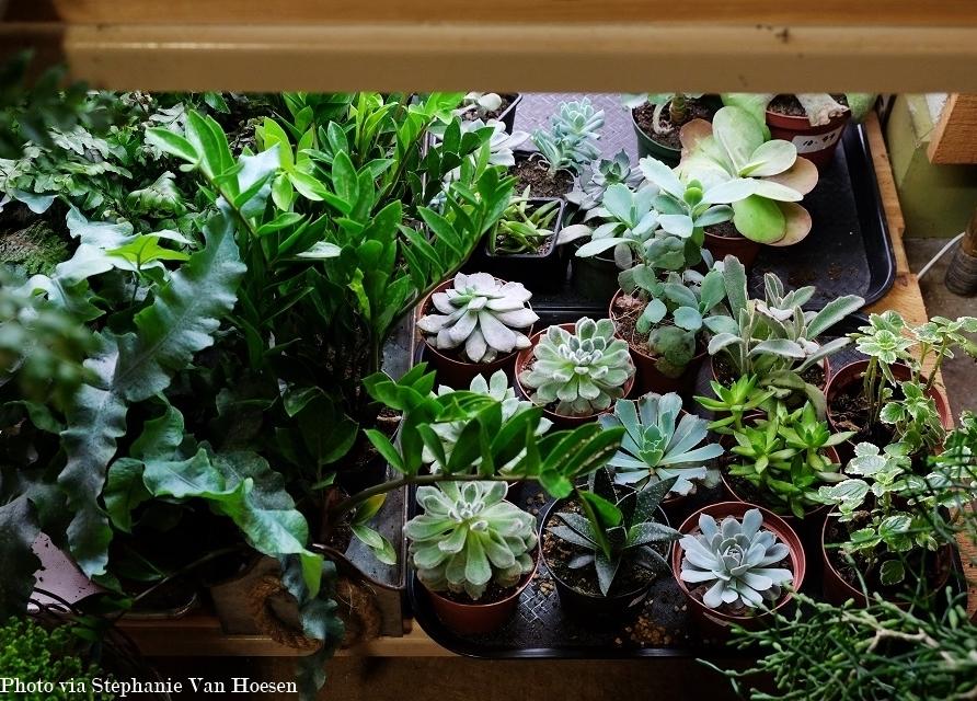 10_Succulents_caption