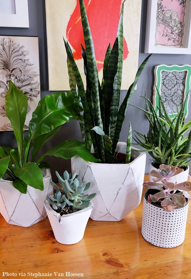 8_Plants at Home_ All Seasons_caption
