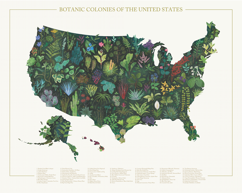 8_MID Goods_Botanic Colonies of The United States